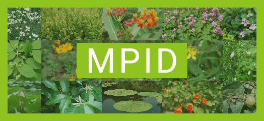 Medicinal Plant Images Database. A bilingual database of over 1000 images of medicinal plants with detailed description.
